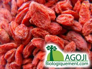 La baie de goji biologique riche en antioxydants naturels puissants